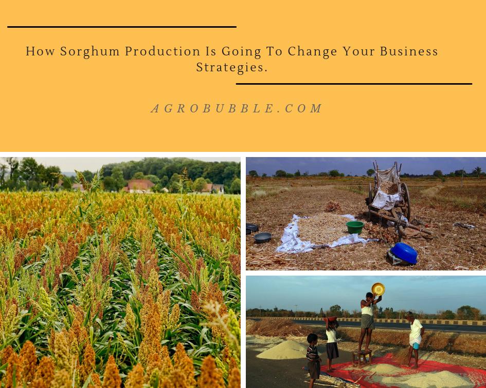 Sorghum production